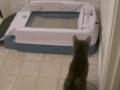 Gata ataca caixa de areia automática