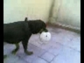 Bianca a brincar com a bola