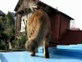 Um gato ao sol