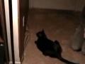 Gato ensina a poupar energia