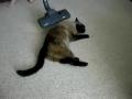 Como aspirar o gato