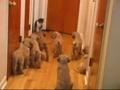 Oito cachorros para um gato