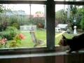 Gato e Esquilo: Há uma janela entre nós