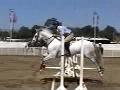 Como salta um cavalo