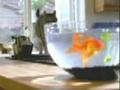 Peixe vs gato