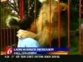 O abraço do Leão