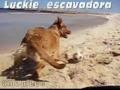 Luckie escava na areia
